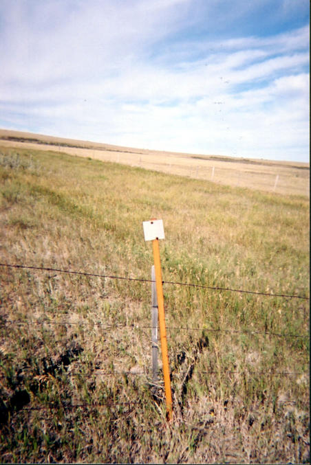 Survey marker near confluence