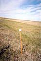 #5: Survey marker near confluence