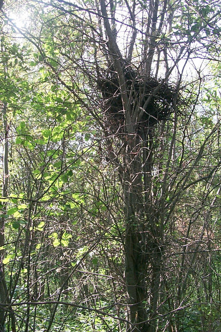 This tree and nest marked the confluence point.