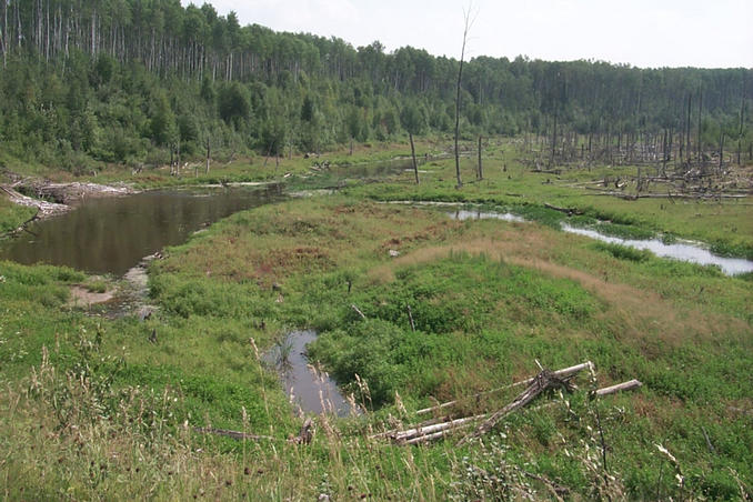 A north woods stream and wet meadow area.