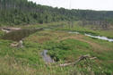 #9: A north woods stream and wet meadow area.