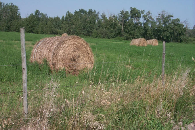 Hay bales in the adjacent field west of the confluence point.