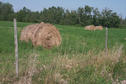 #6: Hay bales in the adjacent field west of the confluence point.