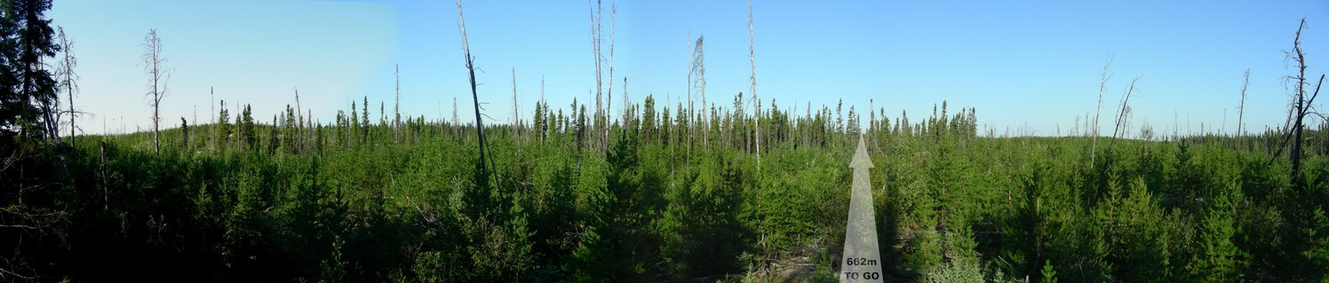 Panorama showing the burned area with new growth