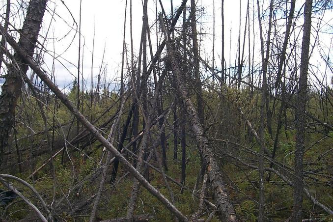 The view east - burnt out forest.