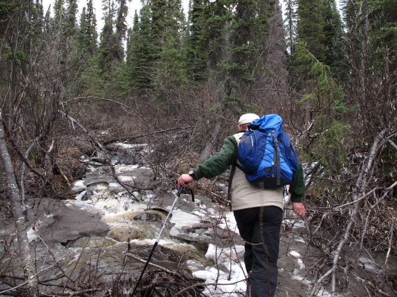 hiking conditions in the taiga