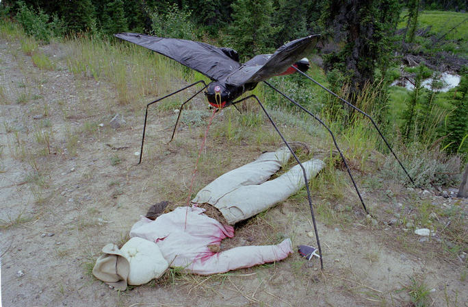 Yukon - Land of the Mosquitos