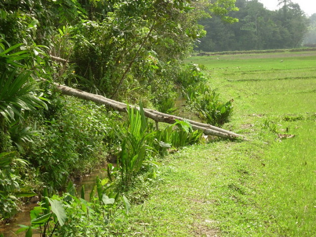 Makeshift wooden ramp from the paddy fields to the fenced properties upon which the CP lies