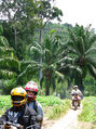 #11: Riding in the luxuriant equatorial vegetation