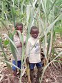 #2: Cutting a sugar cane snack