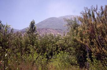 #1: The peak of Cerro El Roble seen from the Confluence