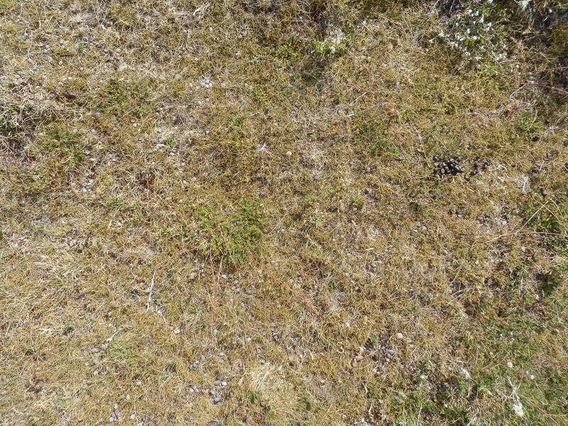 Ground Cover with Sheep Droppings