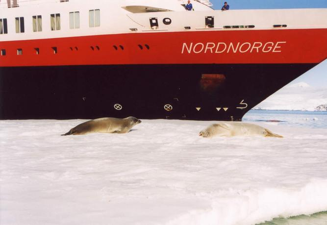 Coming from the Antarctica: Crabeater Seals and Ship