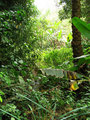 #8: At the bottom of the valley, a bit of rain forest
