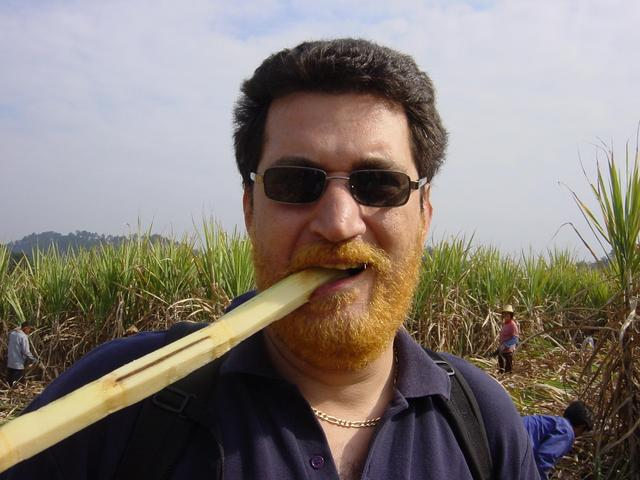 Tony taste-testing the sugar cane