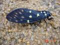#6: Very noisy insect