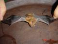 #3: The bat, laid out on the serving tray that proved his downfall