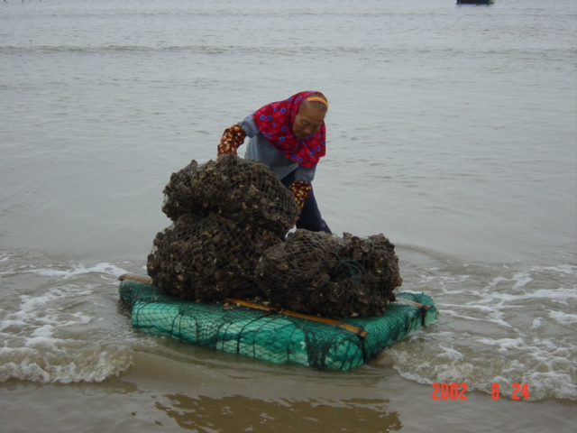 Large rectangular slabs of styrofoam are used to ferry bag loads of oysters from boat to shore.