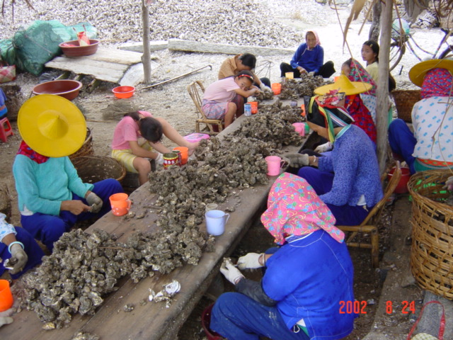 Many local women, both young and old, busy extricating the flesh from the shells.