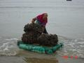 #6: Large rectangular slabs of styrofoam are used to ferry bag loads of oysters from boat to shore.