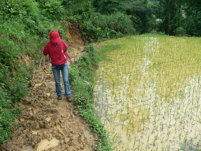 Ah Feng making her way up the extremely muddy path past a rice paddy.