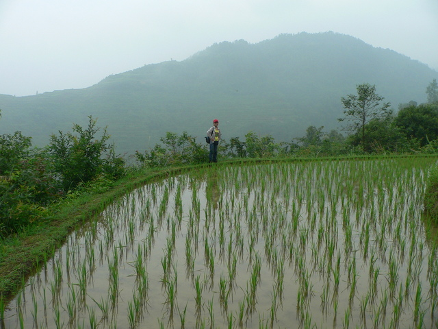 Ah Feng on the edge of a recently planted rice paddy 50 metres above the confluence.