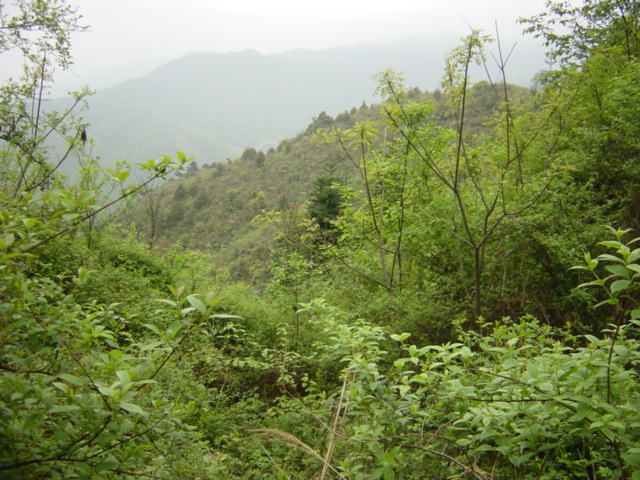 Facing north