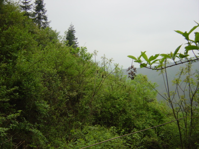 Facing west
