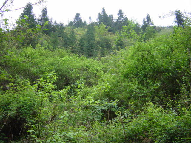 Facing south