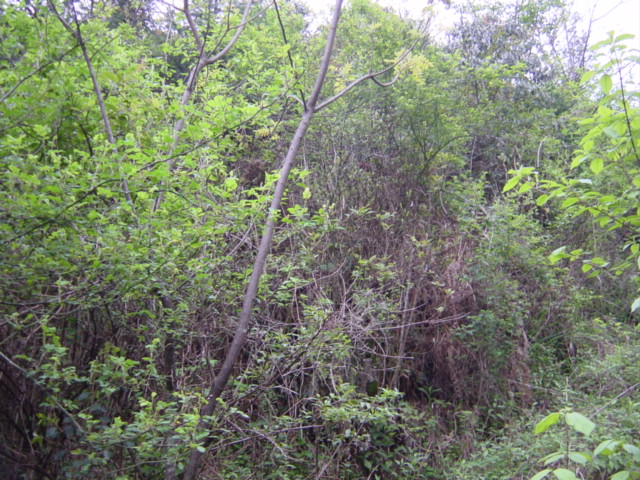 Facing east