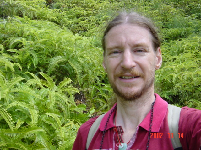 Targ in a sea of ferns.