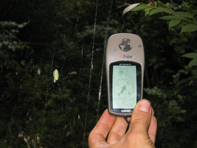 GPS Reading and Spiders