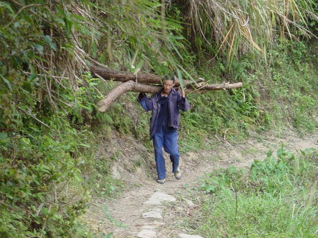 Peasant carrying two large logs on his shoulder