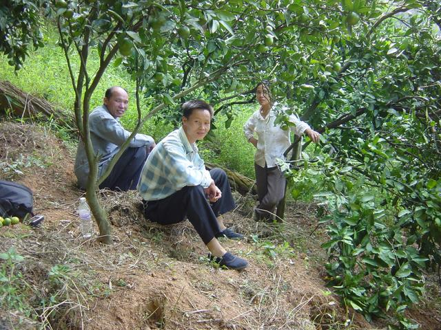 People at top of mandarin orchard, 350 metres west-southwest of confluence