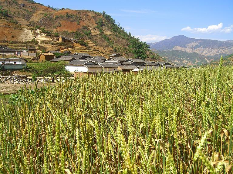 Villagers grew wheat there - and it was already quite hot in April.