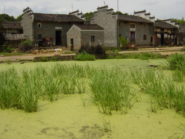 Village of Xintian, with duckweed-covered pond in foreground
