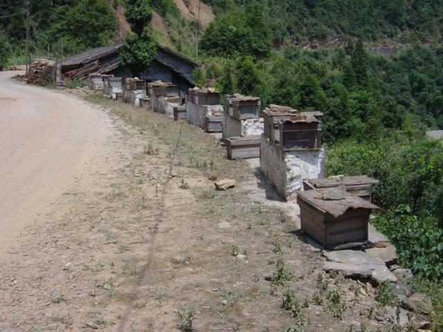 Beehives on road to Maozhushan