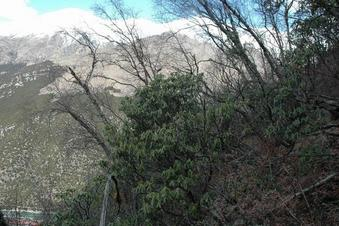 #1: Confluence point on a steep slope and looking toward North