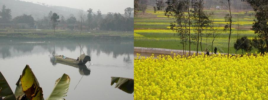 Boat on the Fu River and fields full of flowering rapeseed / 府河船家和灿烂的油菜花