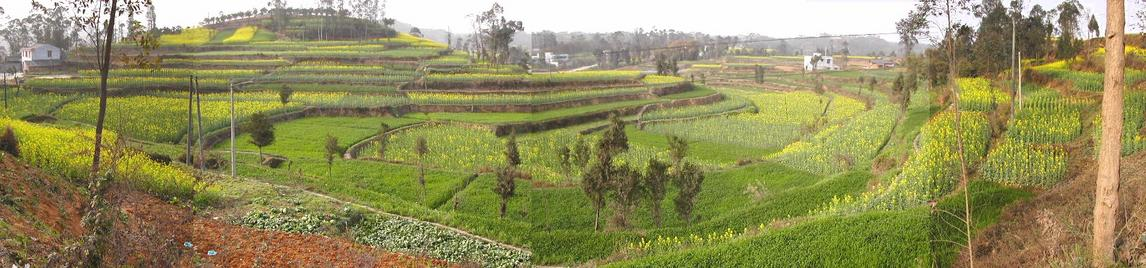Panoramic view of terraced fields on the way to the confluence / 山川秀丽——梯田风光