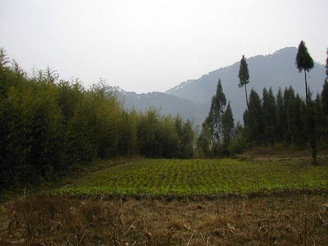Nearby the Confluence Point ourside the bamboo grove facing South