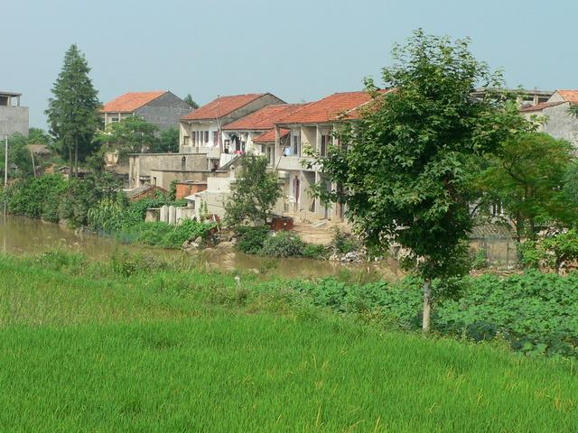 Rice paddy and village.