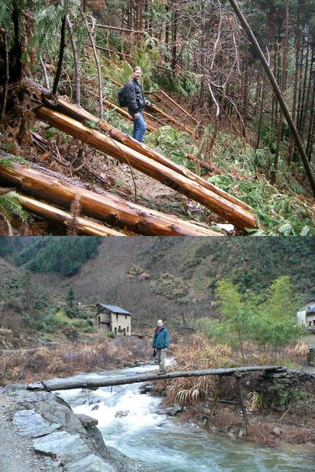 Targ amongst felled logs along the Shijing – Zipiyuan trail. Tim on a log bridge in Tianping.