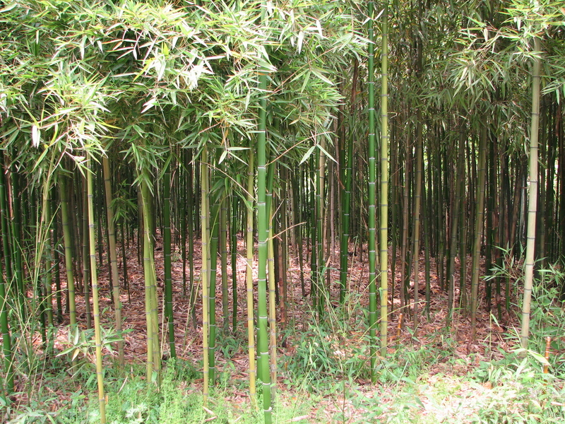 East Facing: bamboo.