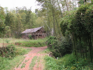 #1: South facing: bamboo pavilion.