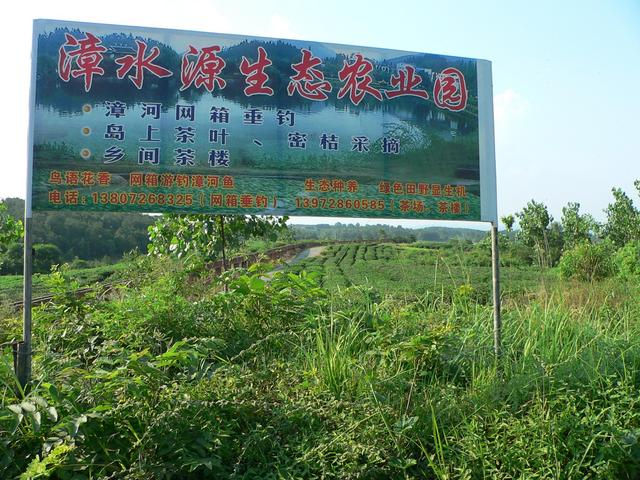 Advertising hoarding and tea plantation near Zhanghe Reservoir.