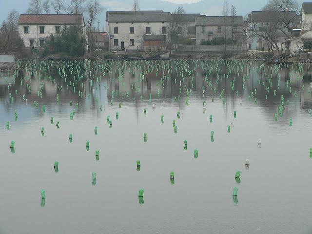 Green plastic bottles supporting submersed nets