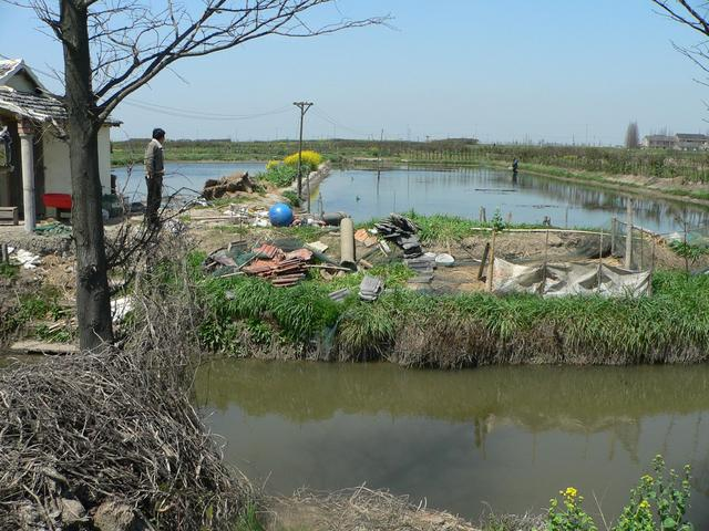 Facing north, looking over the small canal to the shrimp farm