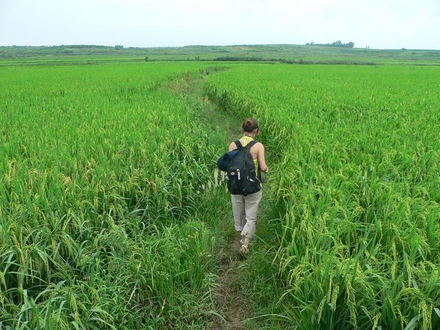 ...and out into paddy fields. Ah Feng leads the way.