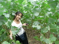 #5: Ah Feng among the unknown crop